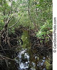 Zanzibar mangrove - Pete-Jozani Mangrove, Zanzibar