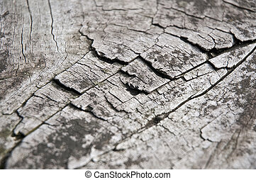 Wood texture - Detail of an abandoned wooden table.