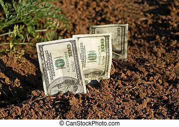 Seed Money - seeds, money, dirt, grow, growing, growth,...