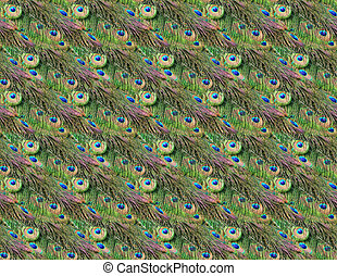 Peacock feathers - Seamless pattern of green and blue...