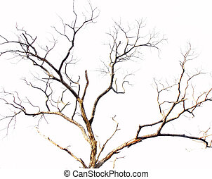 dead tree branch on white background