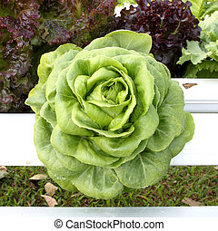 hydroponics vegetable that need no ground for plant -...