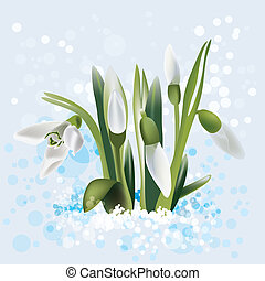 snowdrop in snow, vector illustration
