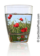 Glass of spring Field of red poppies in a glass of water