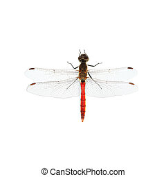 red dragonfly isolated on white