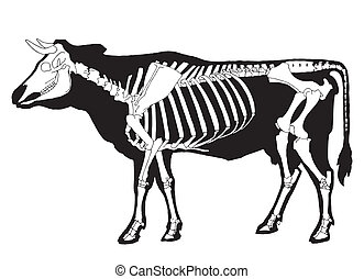 Cow - Black cow silhouette and white skeleton on simple...