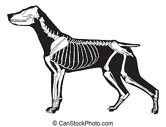 Dog - Black dog silhouette and white skeleton on simple...