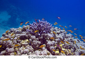 Colorful coral reef with exotic fishes at the bottom of red...