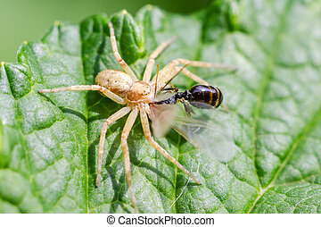 Spider eats insects