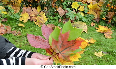 hand take autumn leaves