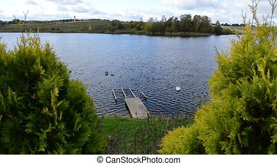 bridge lake swan birds - old broken wooden bridge pier and...