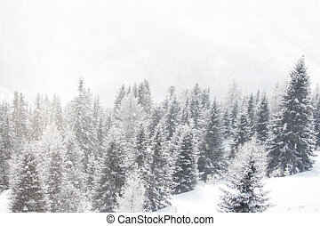 forest in snow on alpen top