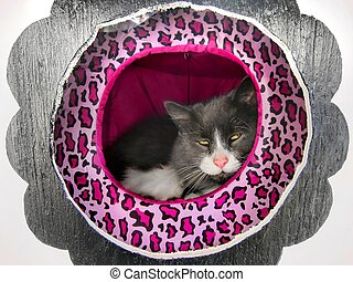 Happy fluffy cat in cat house - Happy fluffy Norwegian cat...