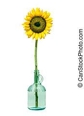 Sunflower in a bottle