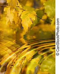 autumn - Birch leaves in autumn