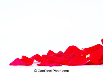 rose petals isolated on a white background