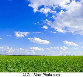 sky - field on a background of the blue sky