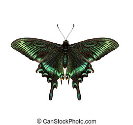 Emerald swallowtail - Butterfly isolated on a white...