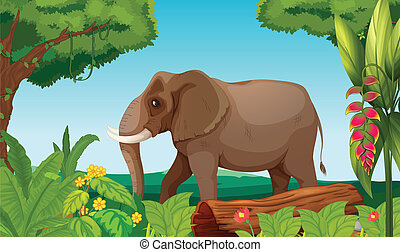 A big elephant in the jungle