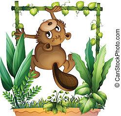 A beaver climbing