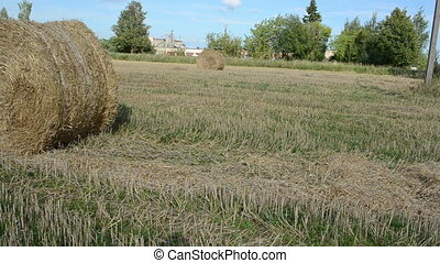 man move straw bale field - man with shirt move straw bales...