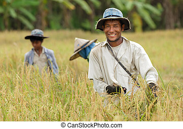 Happy thai farmer harvesting rice with family