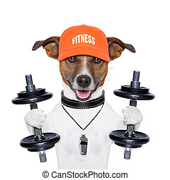 funny fitness dog - dog training with dumbbells and a...