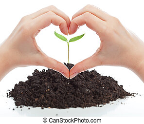 Love for nature concept with seedling and woman hands