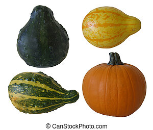 Pumpkin and gourds isolated - Isolated pumpkin and assorted...