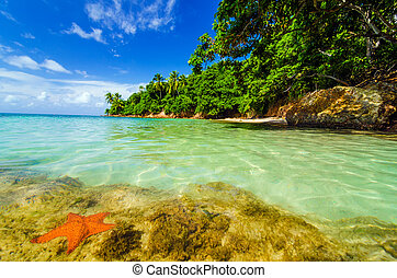 Starfish and Green Island - Starfish in Caribbean water next...