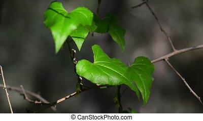 Vibrant fluorescent leaves