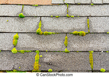 Moss on House Roof - Various textures are photographed in an...