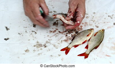 fisherman clean fish gut - fisherman hand with knife clean...