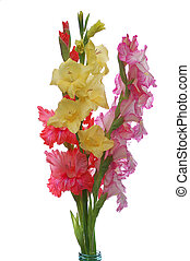 three gladioluses - three colorful gladioluses isolated on...