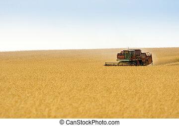 grain harvester combine in field