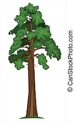 Vector Sequoia - Vector illustration of Big Sequoia Tree