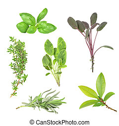 Herb Selection - Herb leaf selection of basil, purple sage,...