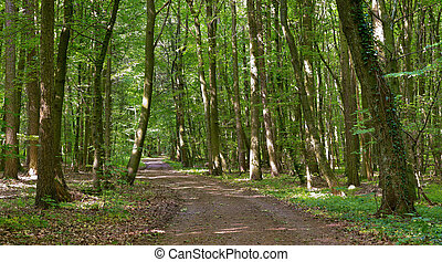 Forest road - Dirt forest road by Beckingen, Saarland...