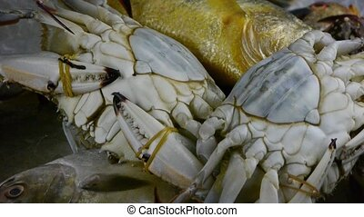 Delicious crab within dial platefisheries ice frozen
