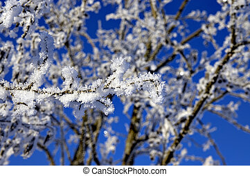 Branch with rime frost