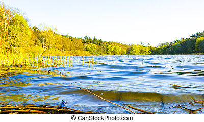 Lake bank - An image of lake bank in the summer