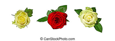 Three roses isolated on white