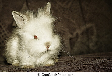 White rabbit - liitle white rabbit pet