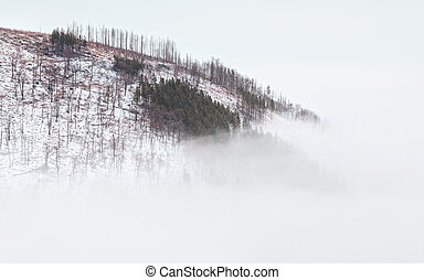 mountain top in dense fog - mountain top in winter covered...