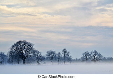 Misty and frosty day