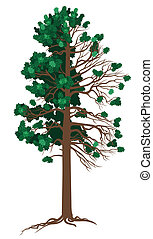 Vector Cedar - Vector illustration of Cedar