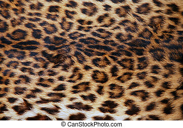 Skin of the leopard - Full screen high resolution shot of a...