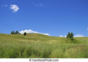 Summer Hillside - A grassy hillside on a nice Summer day in...