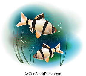 couple of fish in the sea