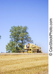 Combine harvesting corn - An image of combine harvesting...